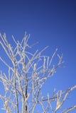 Arbre de l'hiver contre le ciel bleu Photos stock