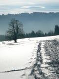 Arbre de l'hiver dans la neige Images libres de droits