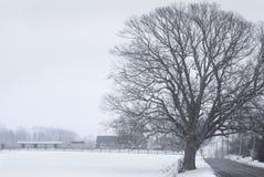 Arbre de l'hiver de bord de la route photographie stock libre de droits