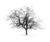 Arbre de l'hiver en regain Photo stock
