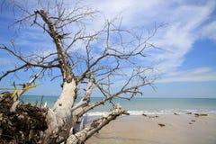 Arbre de la mort sur la plage photographie stock libre de droits