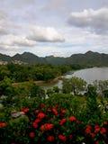 arbre de la Thaïlande Photos libres de droits