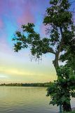 Arbre de lac Images stock