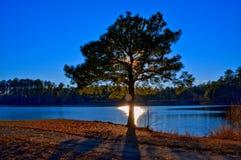 Arbre de lac Photo stock
