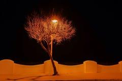 Arbre de lumière Images libres de droits