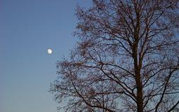 arbre de lune Photographie stock