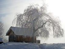 arbre de maison de regain Photographie stock libre de droits