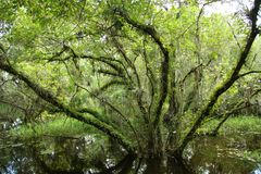 Arbre dans le marais dans les marais Photographie stock
