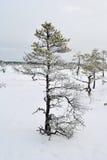 Arbre de marais d'hiver photographie stock libre de droits