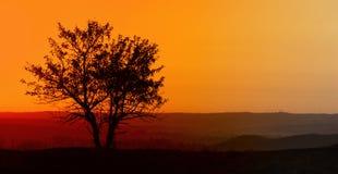 Arbre de matin en soleil épais photographie stock