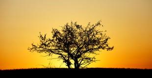 Arbre de matin en soleil épais photos stock