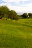 Arbre de mesquite sur le terrain de golf Images stock