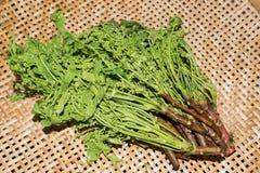 Arbre de neem siamois, Nim, Margosa, quinine (Azadirachta A Images libres de droits
