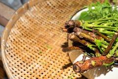 Arbre de neem siamois, Nim, Margosa, quinine (Azadirachta A Photo libre de droits