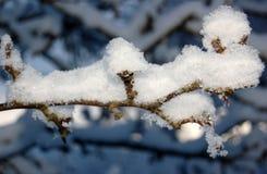 Arbre de neige Photographie stock libre de droits