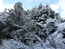Arbre 6 de neige Images stock