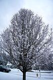 Arbre de neige Photo stock