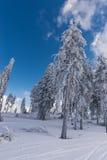 Arbre de neige Photos libres de droits
