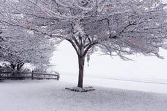 arbre de neige Image libre de droits