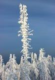 Arbre de neige Photographie stock