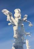 Arbre de neige au soleil Image stock