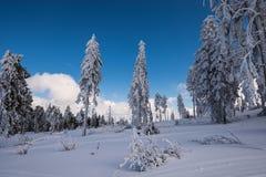 Arbre de neige de montagnes Photographie stock libre de droits