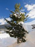 arbre de neige de sapin Images stock