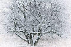 arbre de neige dessous Image stock