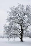 arbre de neige dessous Photo libre de droits