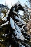 Arbre de neige, hiver en montagnes de Dolomiti, dans Cadore, l'Italie Photographie stock libre de droits
