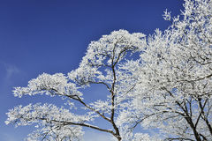 Arbre de neige sur le ciel bleu Photographie stock libre de droits