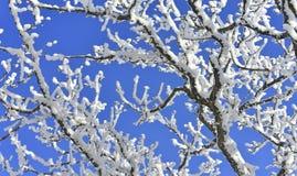 Arbre de neige sur le ciel bleu Image stock