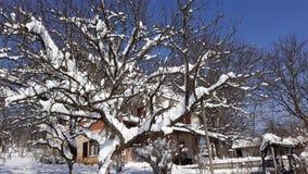 Arbre de neige sur le ciel bleu ensoleillé Image stock