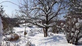 Arbre de neige sur le ciel bleu ensoleillé Photos libres de droits
