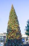 Arbre de Noël élégant au verger Photographie stock libre de droits