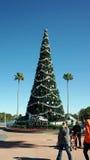 Arbre de Noël aux studios de Hollywood de Disney Photos stock
