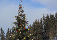 Arbre de Noël avec des lumières en hiver Photographie stock libre de droits