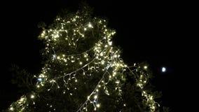 Arbre de Noël avec des lumières avec la lune sur le backround FDV banque de vidéos