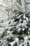 Arbre de Noël avec la neige images libres de droits