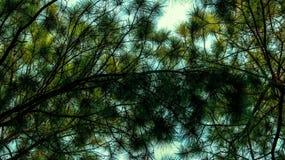 Arbre de Noël avec le ciel photo libre de droits