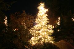 Arbre de Noël complètement des lumières Photographie stock