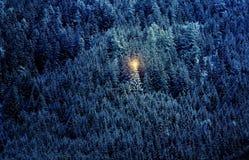 Arbre de Noël dans la forêt Photographie stock libre de droits