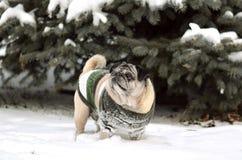 Arbre de Noël dans la neige et les gouttelettes de la sous-neige Images libres de droits
