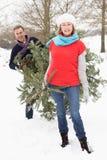 Arbre de Noël de transport de couples aînés dans la neige Image stock