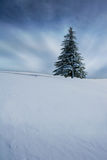 Arbre de Noël en hiver photo libre de droits