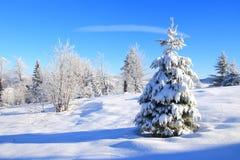 Arbre de Noël en nature Photos stock