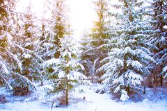 Arbre de Noël magique de vue de paysage de conte de fées fantastique Photos libres de droits
