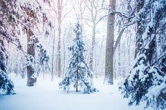Arbre de Noël magique de vue de paysage de conte de fées fantastique Images stock