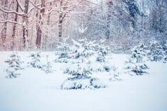 Arbre de Noël magique de vue de paysage de conte de fées fantastique Images libres de droits