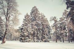 Arbre de Noël magique de vue de paysage de conte de fées fantastique Photographie stock libre de droits